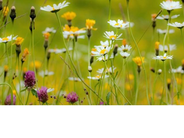 fleurs miel doux